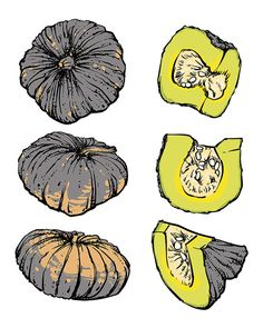 80% Off Sale vector hand drawn sketch pumpkin on a white background. Drawing…