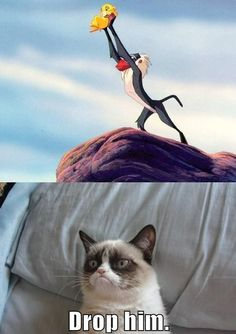 This is funny I couldn't decide which board to put this in I Disney or quotes well I'm putting it in this!! Lol grumpy cat
