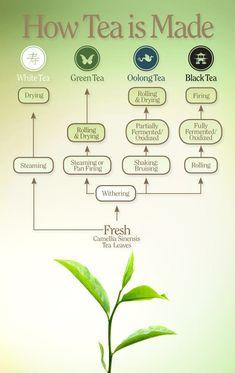Verwerking van thee
