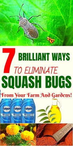 bugs are annoying pests that destroy squash and pumpkin plants. Here are 7 smart ways to get rid of squash bugs naturally.Squash bugs are annoying pests that destroy squash and pumpkin plants. Here are 7 smart ways to get rid of squash bugs naturally. Slugs In Garden, Garden Bugs, Garden Insects, Garden Pests, Garden Fertilizers, Squash Plant, Squash Bugs, Plant Bugs, Plant Pests