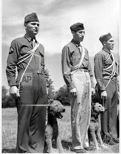 WWII British Isles Any kind of dog is accepted for training if it shows promise of doing the job. (left to right): Cpl. Samuel Brafford, Gray, Ky.; Pvt. George Segal, Philadelphia, Pa., and Pvt. Karl Sudinski, Hopkins, Mich., with Airedales in training for guard duty in England on Sept. 4, 1943.