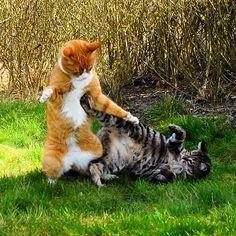 Muffi & Tiger | Flickr - Photo Sharing!