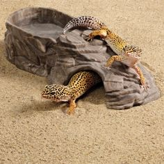 TERRARIUMS - IDEAS - HIDE All Living Things® 3-in-1 Castle Reptile Crib