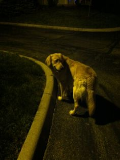 I walk my dog in the middle of the night without a leash