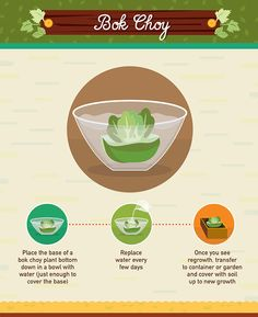 grow your own bok choy from scraps
