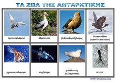 Ζήση Ανθή : Εποπτικό υλικό για τα πολικά ζώα ( flashcard polar animals ) .    Ο Νότιος Πόλος και τα ζώα του - Λίστες αναφοράς για το νηπιαγ...