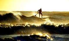 surfing in the sun - Google Search