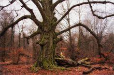 alte Bäume IV