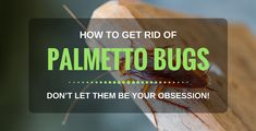 How To Get Rid Of Palmetto Bugs Naturally: 10 Best Ways in 2018 Best Pest Control, Bug Control, Palmetto Bugs, Household Pests, Natural Pesticides, Bees And Wasps, Pest Management, Beneficial Insects, Humming Bird Feeders
