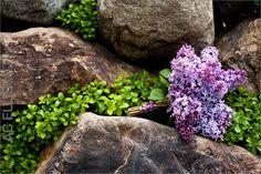 Purple wedding bouquet - lilacs