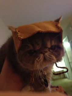 "I know what you're thinking and yes, I am ""that person"" who would make an Ewok hat for my cat"