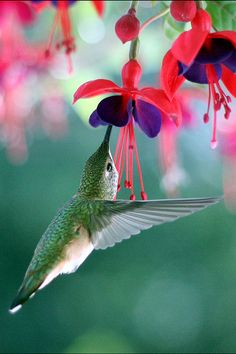Loving flowers and humming birds!  ;)