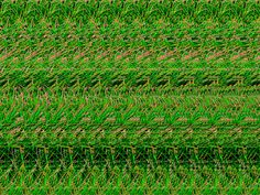stereograms - Google Search
