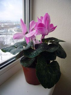 House plants can help clean and purify the air we breathe.