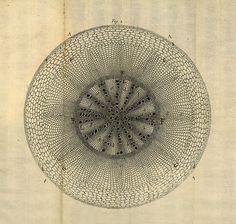 """Find out more in Brian Garret's article for The Public Domain Review – """"The Life and Work of Nehemiah Grew"""" – which explores how Grew's pioneering 'mechanist' vision in relation to the floral world paved the way for the science of plant anatomy."""