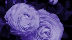 Как распускаются цветы. Очень красиво!