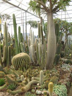 Perfect light and moisture Cacti And Succulents, Planting Succulents, Cactus Plants, Best Indoor Trees, Succulent Landscaping, Dry Garden, Indoor Flowers, Cactus Decor, Miniature Plants