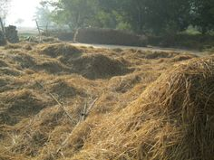 the hay drawn n spread out to dry