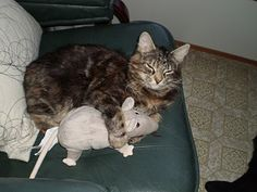 Dont you dare take him...its my mouse...
