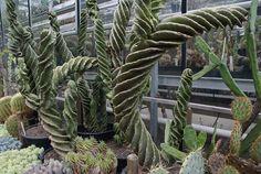Amsterdam, Photos, Plants, Gardens, Black Picture, Botany, Places, Planters, Plant
