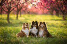 Broskový sad Dog Photography, Fox, Animals, Animales, Animaux, Animal, Animais, Foxes