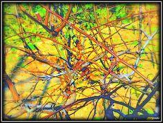 枝の錯綜    Intricate branch     pic.twitter.com/ZXOSOh3QgS       http://kissy-g.blogspot.jp/2013/12/blog-post_597.html…   Yosikiのギャラリー