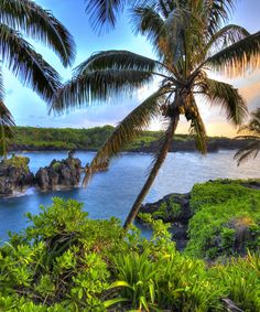 Hawaii Hawaii, United States Hotels Jetsetter Guides Trip Ideas tree water palm sky grass habitat vegetation natural environment River shore Coast plant Lake tropics Ocean arecales Sea Beach palm family woody plant landscape Jungle rainforest flower Lagoon pond surrounded