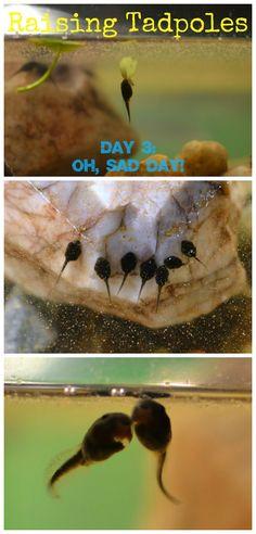 In Lieu of Preschool: {Raising Tadpoles: A Documentary} Day Three -- Oh, Sad Day!