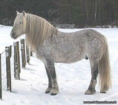 Highland Pony - created for van - De Uitwisseling - Community - De Sims 3 Pony Breeds, Horse Breeds, Horses And Dogs, Show Horses, Mini Horses, Horse Pictures, Pictures To Draw, Highland Pony, Draft Horses