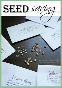 20 money-saving gardening tips Seed Starting, Saving Seeds, Edible Garden, Garden Projects, Garden Tools, Harvest Time, Growing Gardens, Farm Gardens, Outdoor Gardens
