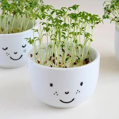 cute cress cups with a face - diy fun for kids