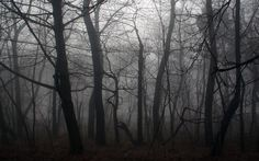 Dark Forest | Dark Forest Photo - pic 6