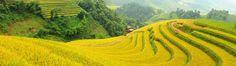 Voyage au Vietnam, trek Sapa