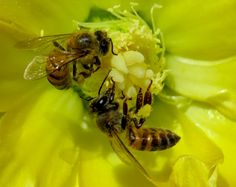 Insect Photography, Insects, Animals, Bees, Plants, Animales, Animaux, Animal, Animais