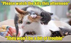 Funny Cat Birthday Meme : Grumpy cat happy birthday meme happy birthday memes
