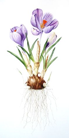 Crocus Pickwick, All Galleries, Leigh Ann Gale, SAA Professional Members' Galleries