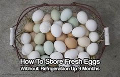 Store Fresh Eggs Without Refrigeration Up 9 Months. Stop refrigerating your eggs. Store them for 9 months with this simple and easy method.