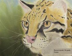 Art Contest Semifinalist, Grades 6-8: Ocelot, Brenna Litynski, Age 12