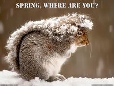 I want Spring..