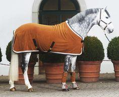 Happy Horses Happy Riders : Photo
