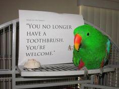 Parrots can be assholes too (Parrot Shaming) - Album on Imgur Cockatiel b18b220da2