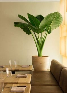 House Plants Decor, Plant Decor, Big House Plants, Office Plants, Interior Plants, Green Life, Green Plants, Houseplants, Planting Flowers
