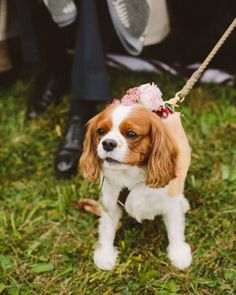 Another big part of their ceremony was the couple's Cavalier King Charles spaniel, Penny, who acted as the flower girl and walked down the aisle with Alisa's maid of honor.…