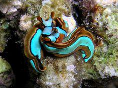 Slug hug #seaslugs