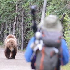 Do you know what to do if you cross paths with a bear? Make sure you are prepared before you hit the trail at Yellowstone or elsewhere.