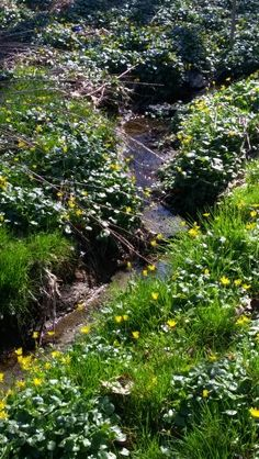 Creek Photographs, Mountains, Nature, Plants, Travel, Naturaleza, Viajes, Photos, Destinations