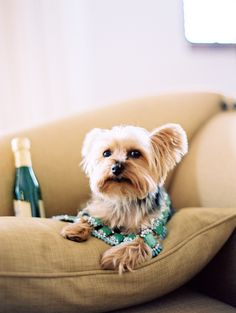A whimsical wedding is surely not complete without your fur baby in attendance. #whimsical, #dog  Photography: Leo Patrone Photography - leopatronephotography.com Flowers: Modern Day Design - moderndaydesign.com/ Event Coordination: XOXO BRIDE - xoxobride.com  Read More: http://www.stylemepretty.com/2012/02/20/santa-barbara-wedding-by-leo-patrone-photography-xoxo-bride/