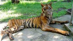 zoo_de_la_muerte_1