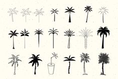 Ad: 50 Palm Tree Vector Logos & Icons by New Tropical Design on 50 x Palm tree vectors. Every type of style: single-line, abstract, textured, vintage, geometric & sketched. Palm Tree Sketch, Palm Tree Drawing, Tree Sketches, Pine Tattoo, Tree Tattoo Back, Pine Tree Tattoo, Palm Tree Tattoos, Paper Palm Tree, Palm Trees