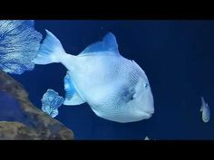 Aquarium de Las Palmas de Gran Canaries - YouTube Youtube, Films, Pets, Animals, Las Palmas, Movies, Animales, Animaux, Cinema